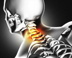 首と頚椎の構造