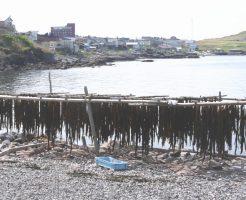 フコキサンチンは褐藻類の成分